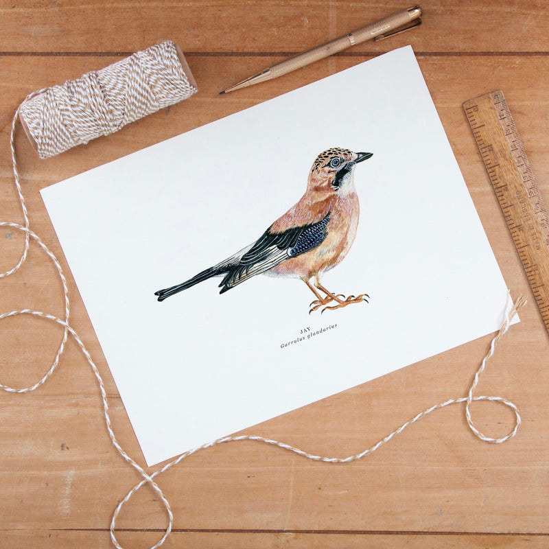 British Jay Bird Illustrated Giclée Print - 18 x 24 cm