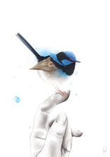 Load image into Gallery viewer, superb fairywren watercolour by Imperium Illustrations