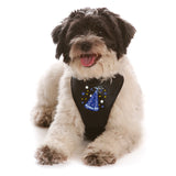 Birthday Boy WagSwag Harness Set