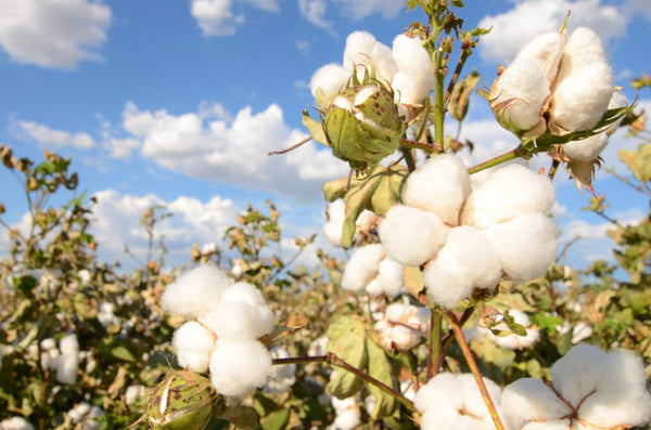 Organic Cotton is the Greener Cotton