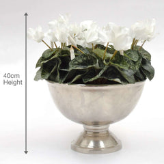 Bamburgh Silk Cyclamen, White in Silver BowlBamburgh Silk Cyclamen, White in Silver Bowl