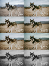 Load image into Gallery viewer, Wooftribe Preset Pack