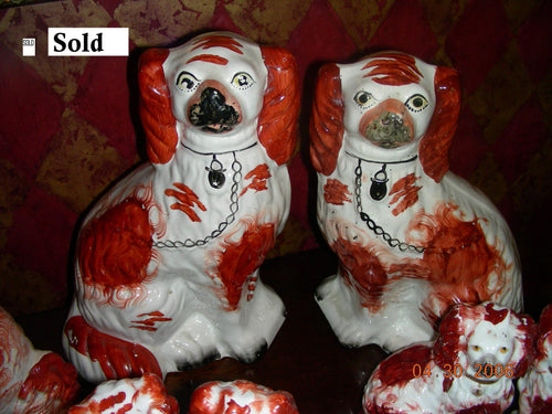 Red and white spaniels
