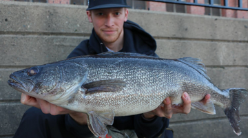 Oswego Fishing Report: Oswego River & Lake Ontario (6/17/19)