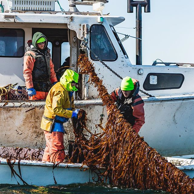 Maine Biz: With New Retail Products, Atlantic Sea Farms Seeks to Expand Kelp Market