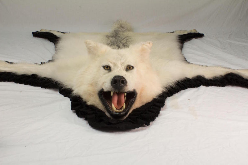 Arctic Timber Wolf Mount