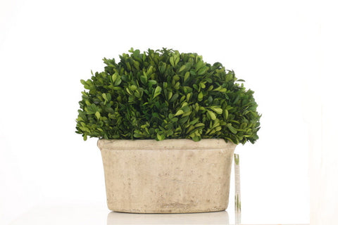 Topiary Oval Base