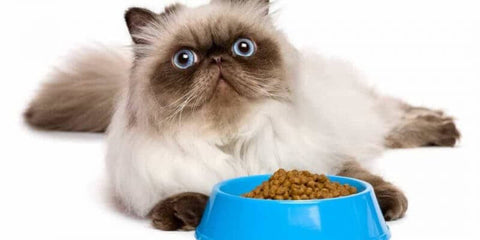 What's The Difference Cetween Cats of Different Ages in Their Food Intake