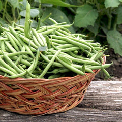 Bean (Bush) - Harvester