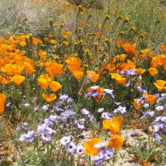 Wildflowers - California Native Scatter Garden Seed Mix
