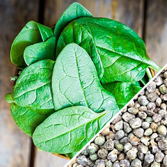 Spinach - Noble Giant
