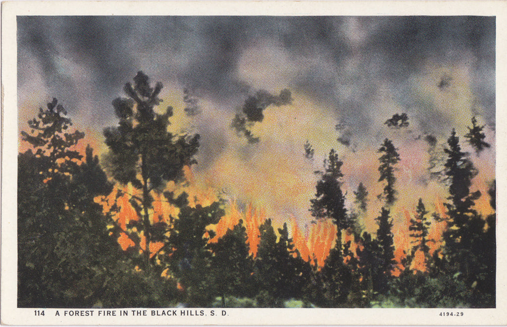 Forest Fire Black Hills SD Postcard