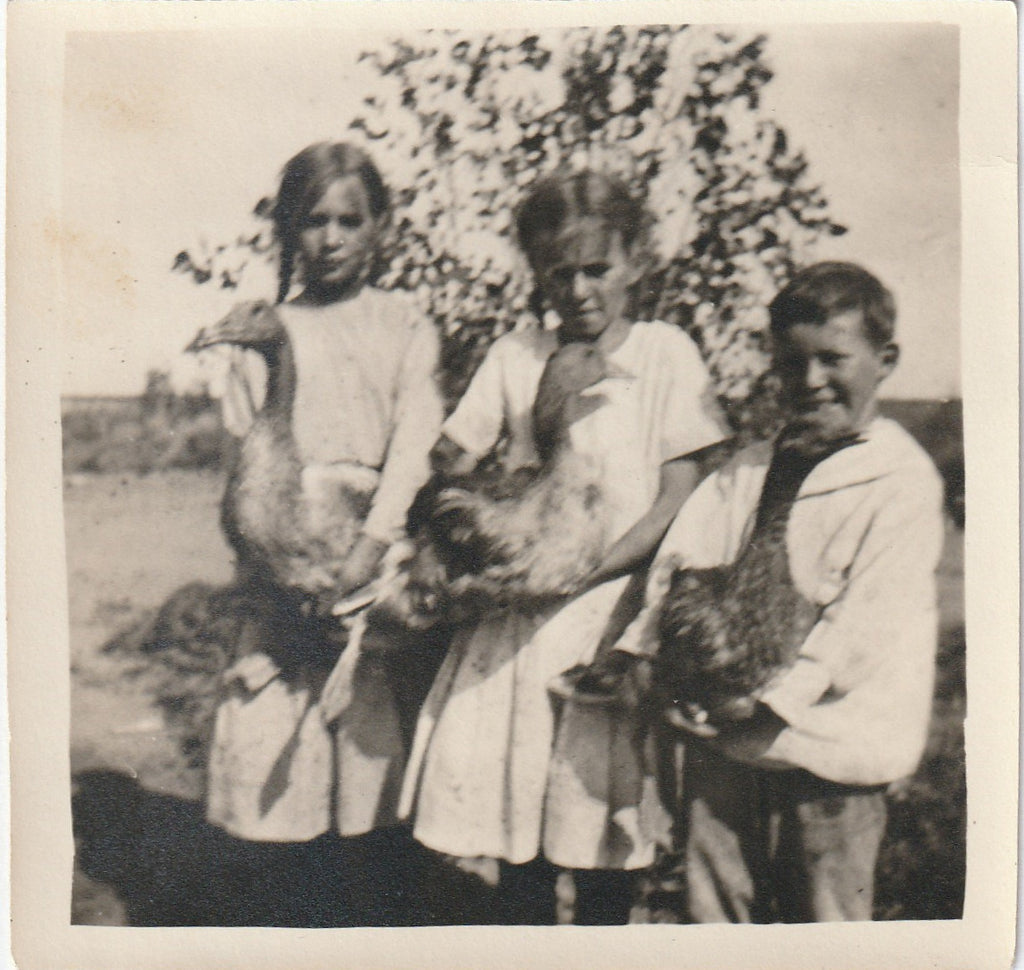 Three Geese Antique Photo Snapshot