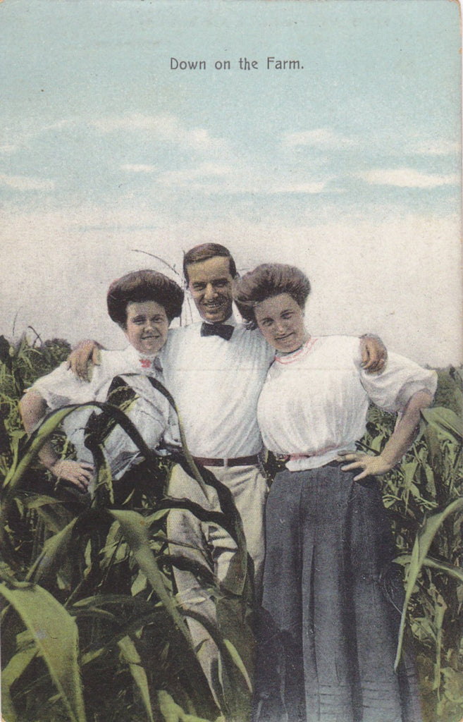 Down on the Farm- 1900s Antique Postcard- Trio of Friends- Edwardian Romance- Cornfield- Gibson Girls- Artino Post Card- Unused