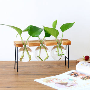 Hydroponic Plant Transparent Vase with Wooden Frame