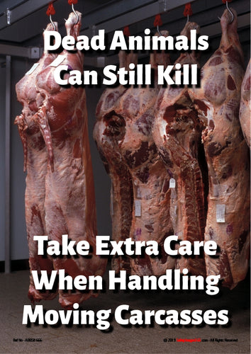 Animal carcasses, cattle, hanging on hooks in meat chiller.
