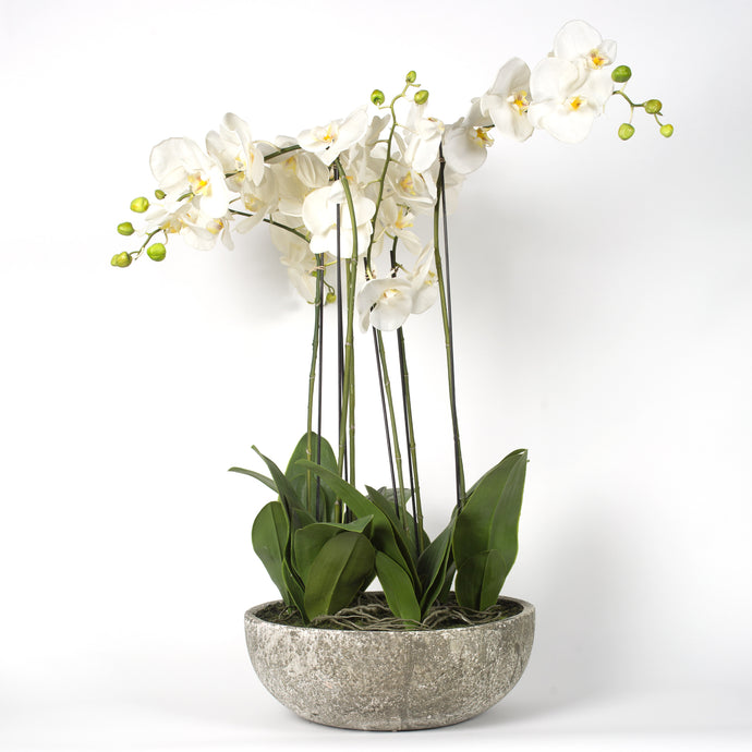 Large Orchid in Stone Planter