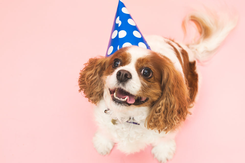 cute puppy with party hat
