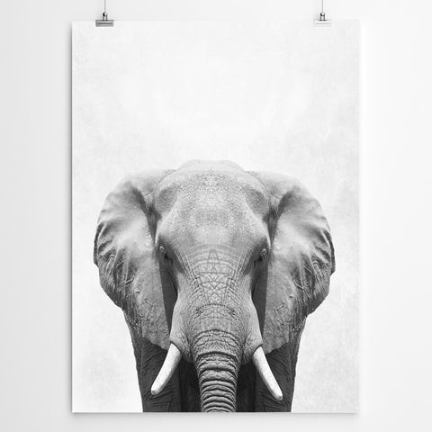 Elaphant art prints