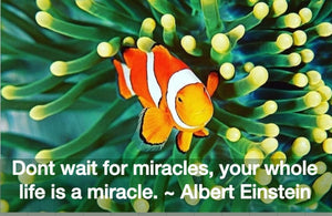 Don't wait for miracles, your whole life is a miracle!