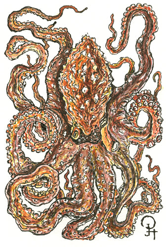 Single Postcard, Giant Pacific Octopus
