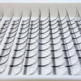 Close up of D Curl Lash Trays NZ