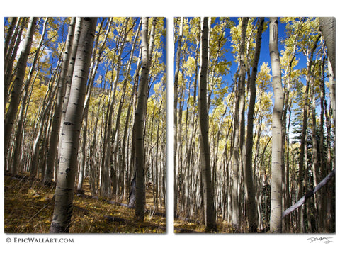 """Autumn Aspen Meadow"" 2-Piece Fine Art Canvas Wall Display"