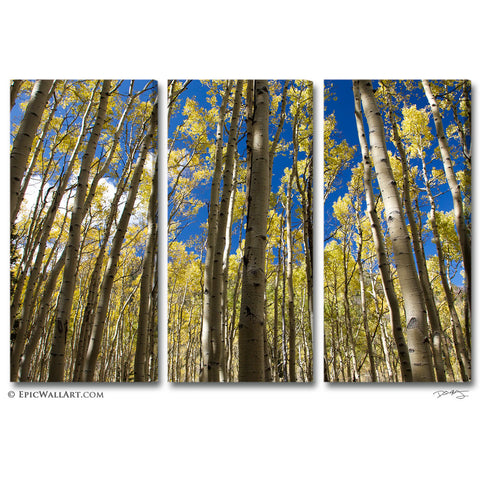 """Golden Aspen Meadow"" Autumn Forest 3-Piece Fine Art Canvas Wall Display"