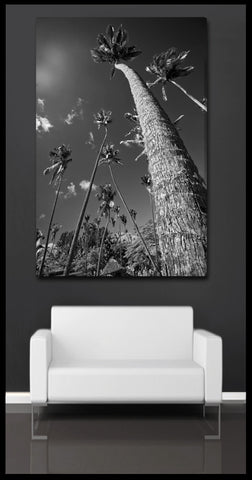 """Towering Palms"" Black & White Fiji Islands Fine Art Gallery Wrapped Canvas Print"