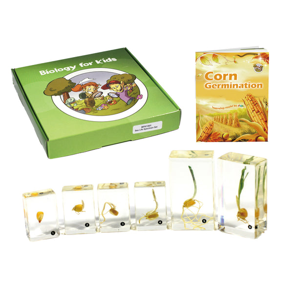 BFK1131<br/>Biology for Kids-Corn Germination