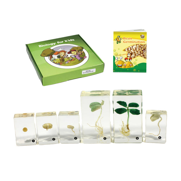 BFK1132<br/>Biology for Kids-Bean Germination