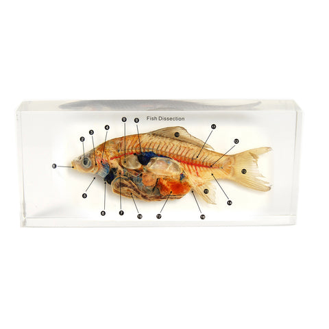 T601S<br/>Fish Dissection Small