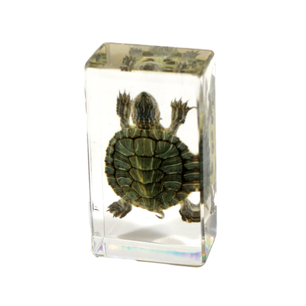 TE31S<br/>Turtle Small<br/>