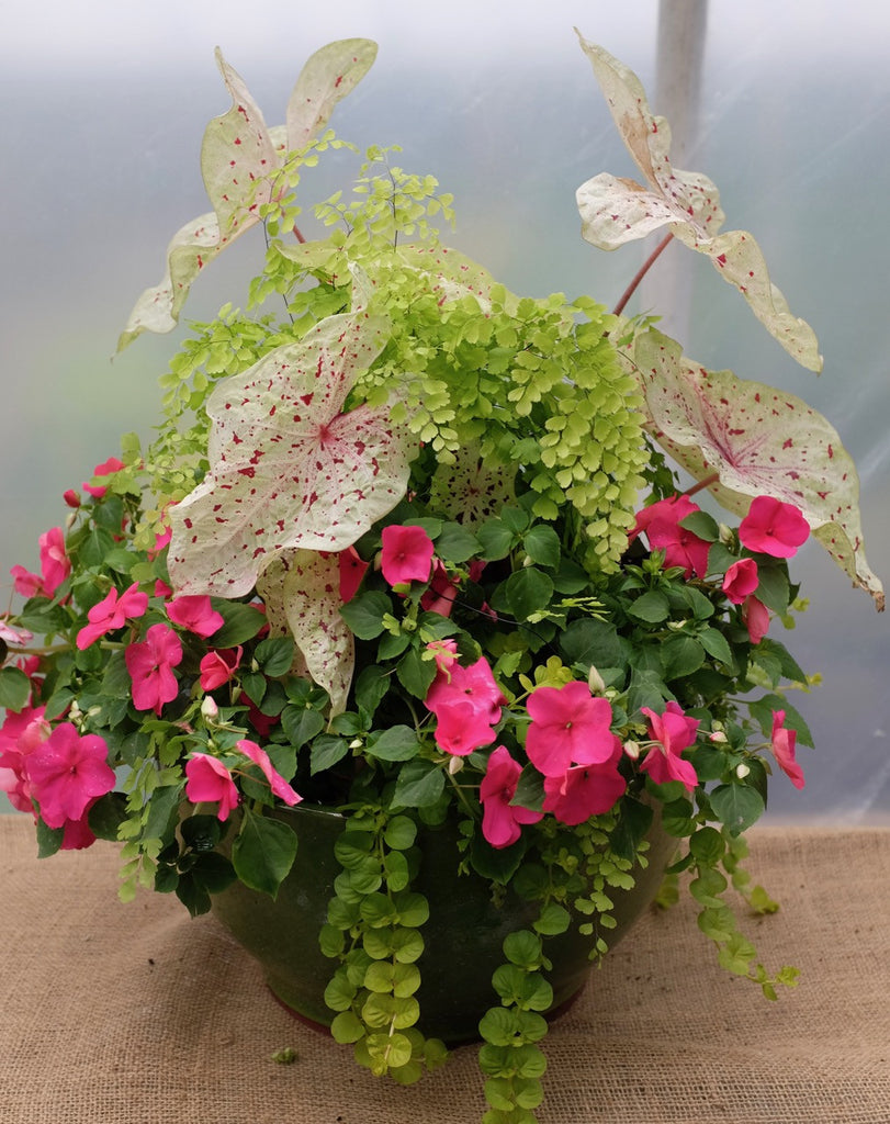 Annual Garden with Lipstick Impatiens, maiden hair fern, Caladium by Michler's Florist