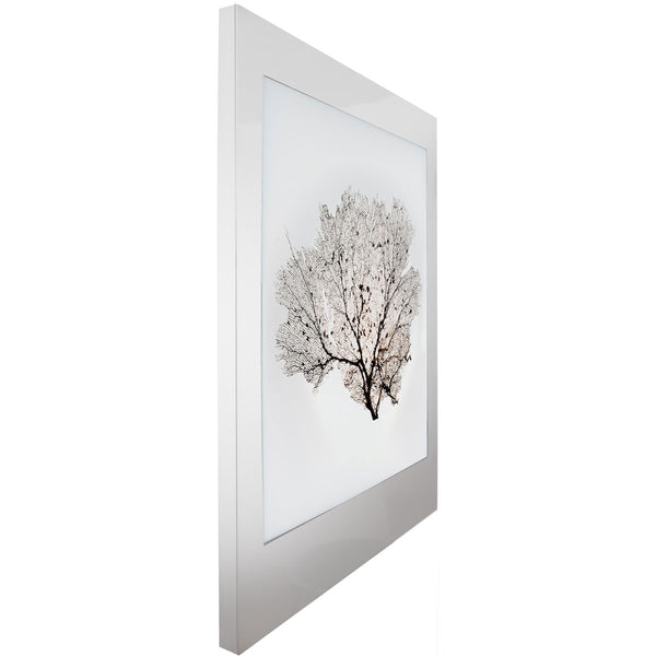 Aviation Lightbox Frames: Sea Fan 2