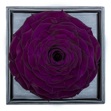 Load image into Gallery viewer, Dark Purple Mega Preserved Rose | Crystalline Rose Box - The Only Roses