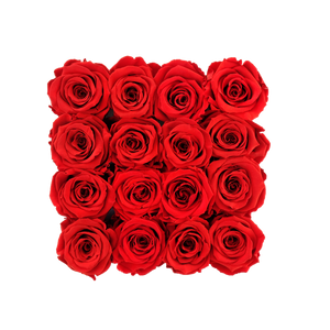 Red Preserved Roses | Square White Huggy Rose Box - The Only Roses
