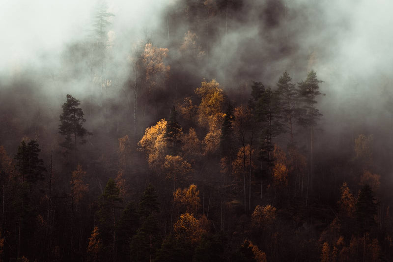 Moody Autumn Forest of Norway