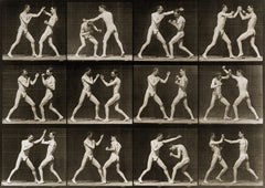 Animal Locomotion, 2 Men Boxing