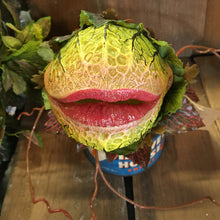 Load image into Gallery viewer, Audrey II