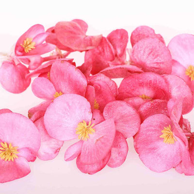 Pink Freeze Dried Edible Begonia Flowers