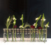 Test Tube Flower Vase - Linear