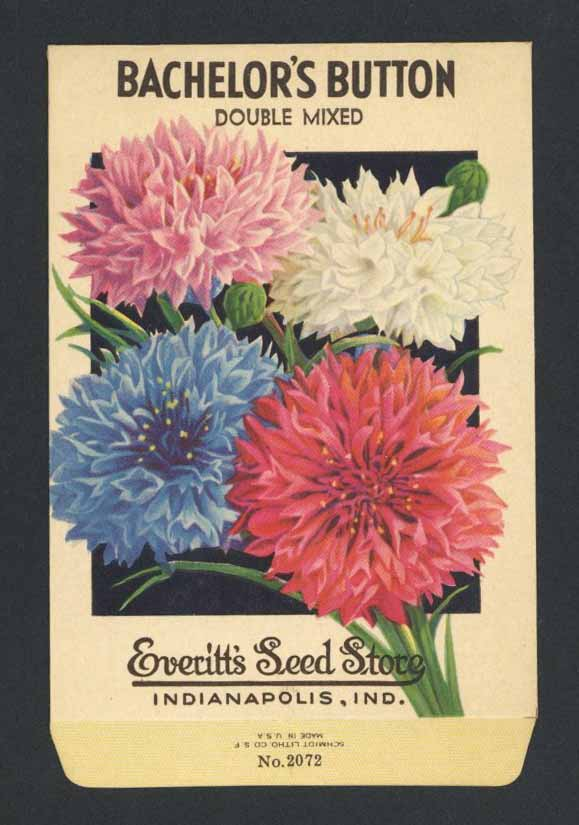 Bachelor's Button Vintage Everitt's Seed Packet, Double Mixed