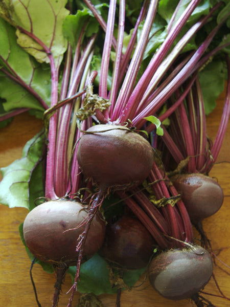 Detroit Dark Red beet image####