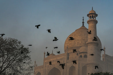 Pigeons of the Taj Mahal