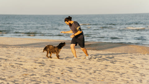 Dog training in the morning at the beach