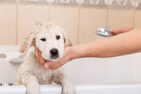 Puppy being given a bath