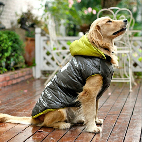Cozy Cooldown Dog Insulated Coat