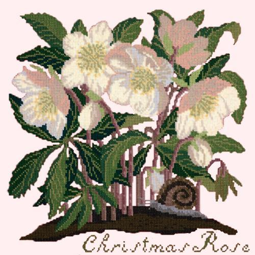 Christmas Rose Needlepoint Kit Elizabeth Bradley Design Cream