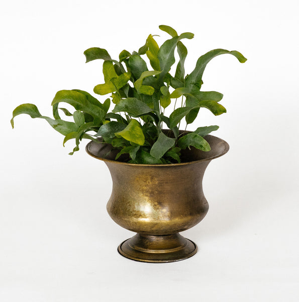 Iron Planter Pot